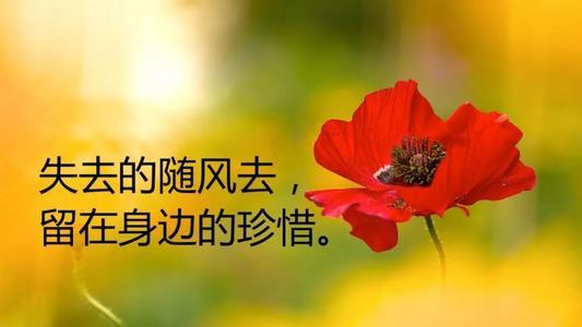 感悟人生,心情感慨的语录句子